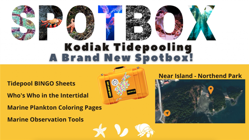 Spotbox announcement for Kodiak Tidepooling on Near Island -Northend Park with a list of activities: Bingo, Who's Who, Coloring pages, and Marine Observation Tools.